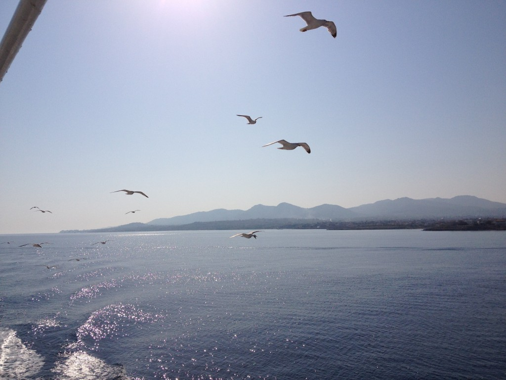 Seagulls shepherd the ferries into port at Aegina